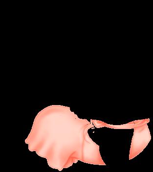 Furão Cappuccino