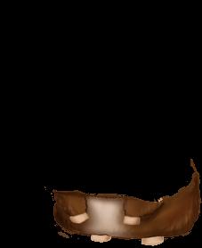 Mouse Angora