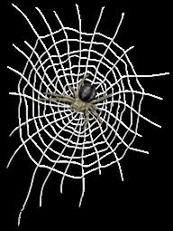 Prisão de lona e aranha