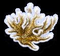 Alga Marinha 3