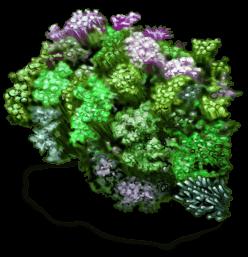 Rocher avec algues