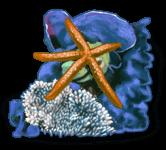 Rocher Etoile De Mer
