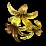 Flores surpresa