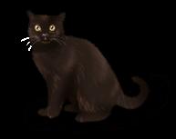 Bruxa gato