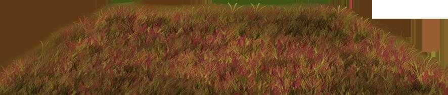 Nupcial do carro da grama