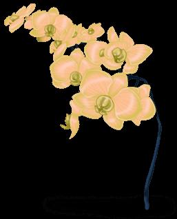 Flor da neve