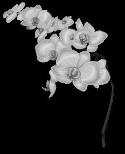 Fleur des Neiges