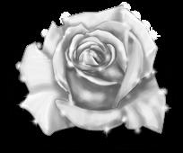 Rose géante Fée de l'hiver