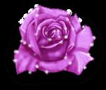 Fada rosa do inverno