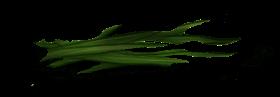 Erva macia