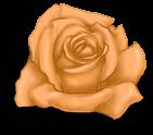 petite rose St Valentin