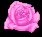 Pequeno dia dos namorados rosa