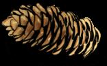 Pitada de pão