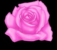 Grande dia dos namorados rosa