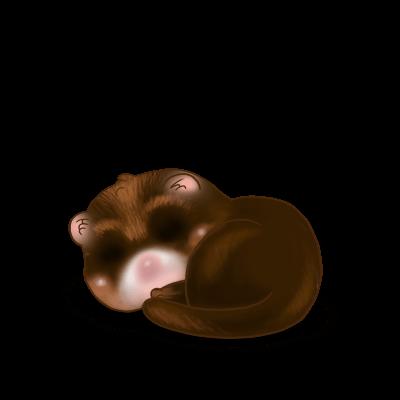 Furão Chocolat