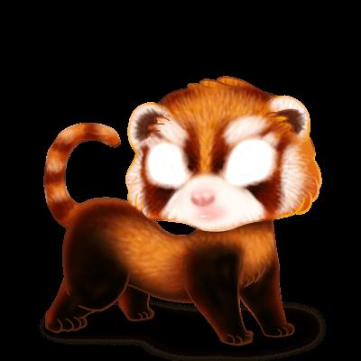 Furão Panda Roux