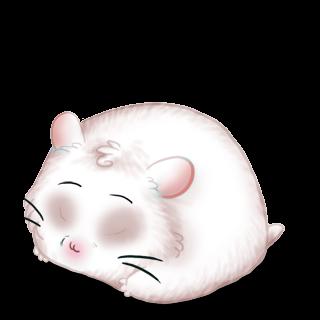 Criceto Albinos