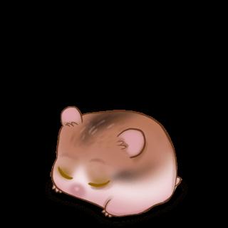 Criceto Caramelo
