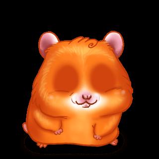 Adote um Criceto Abóbora de hamster