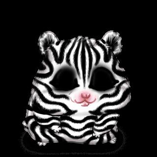Adote um Criceto Zebra