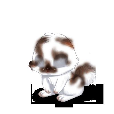 Adote um coelho Marrom e branco