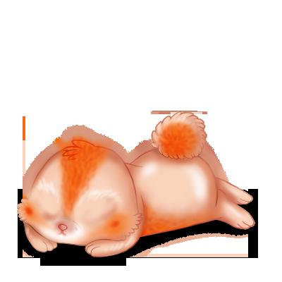 Adote um coelho Poiledecarotte