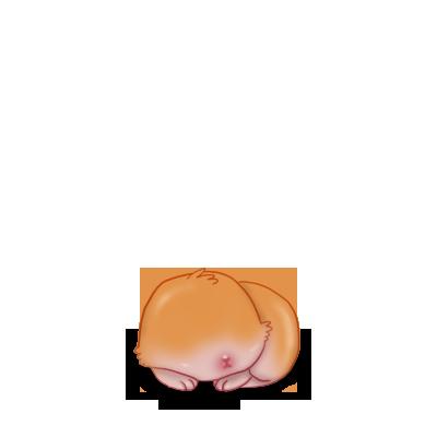 Adote um coelho Áries Roux