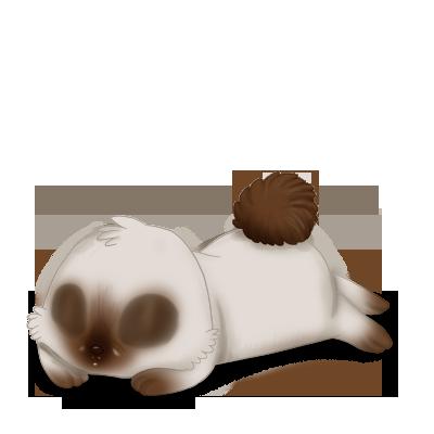 Adote um coelho Siamês