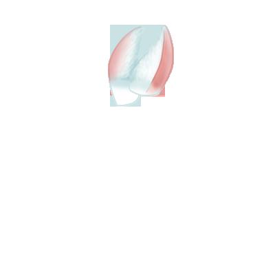 Adote um coelho Neve