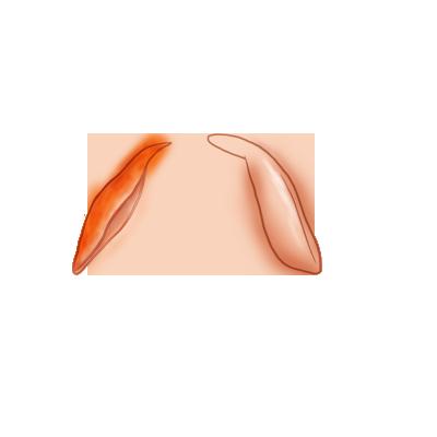 Adote um coelho Cenoura