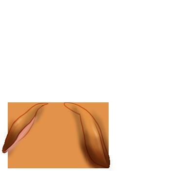 coelho Roux Bélier