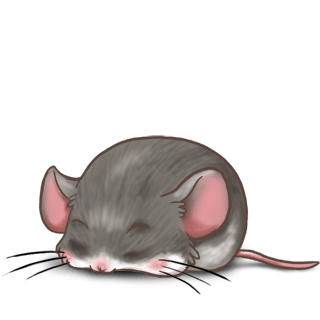 Mouse Casa