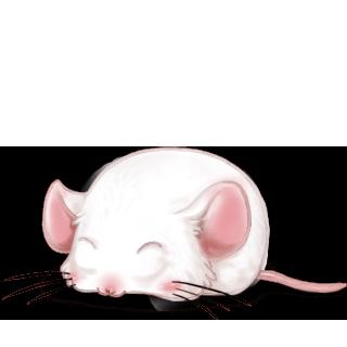 Adote um Mouse Branco