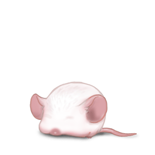 Adote um Mouse Albino