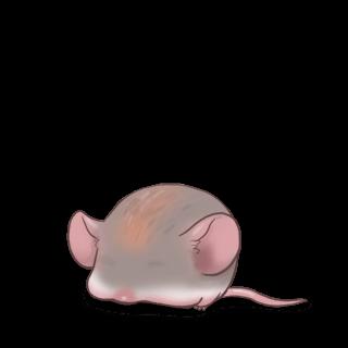 Adote um Mouse Angorá
