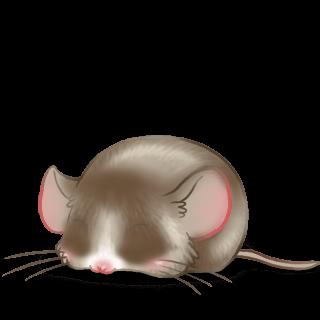 Mouse Pralina
