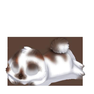 coelho Siamois
