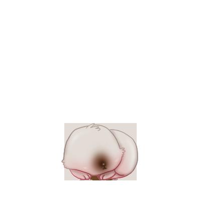 Adote um coelho Branco e cinza