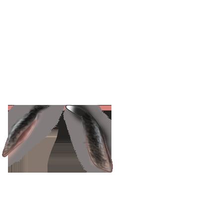 coelho Neve