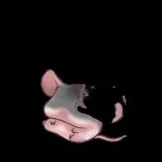 Adote um Mouse Damasco de angorá
