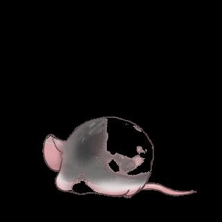 Mouse Domestique