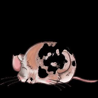 Mouse Abricot angora