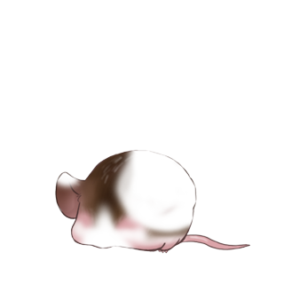 Mouse Crème