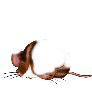 Mouse Chocolat
