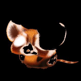 Mouse Iona