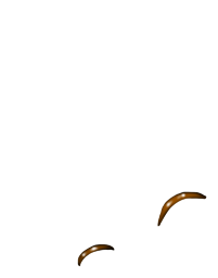 Furão Hibou